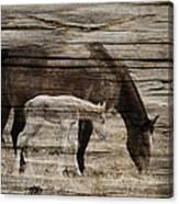 Horses On Wood Canvas Print