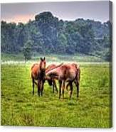 Horses Socialize Canvas Print