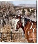 Horsing About V3 Canvas Print