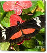 Hortense Butterfly Canvas Print