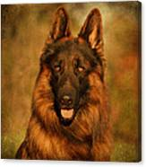 Hoss - German Shepherd Dog Canvas Print