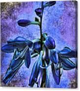 Hosta Blossom Canvas Print