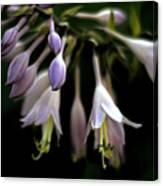Hosta Petals Canvas Print