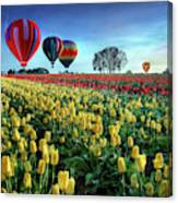 Hot Air Balloons Over Tulip Field Canvas Print