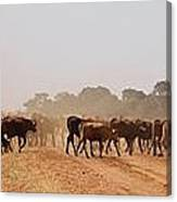 Hot Dry And Dusty Canvas Print