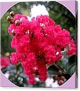 Hot Pink Crepe Myrtle Blossoms Canvas Print