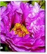 Hot-pink Flower Canvas Print