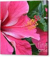 Hot Pink Hibiscus 2 Canvas Print