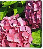 Hot Pink Hydrangea Canvas Print