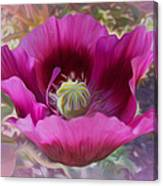 Hot Pink Poppy Canvas Print