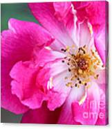 Hot Pink Rose Canvas Print
