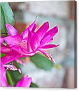 Hot Pink Christmas Cactus Flower Art Prints Canvas Print