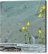 Hot Spring Flowers Canvas Print