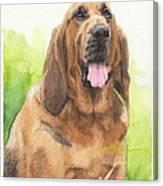Hound Dog Watercolor Portrait Canvas Print