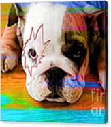 House Broken Bulldog Puppy Canvas Print