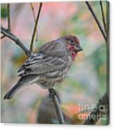 House Finch In Autumn Canvas Print