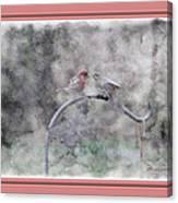 House Finch - Kiss Me Canvas Print