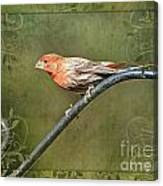 House Finch On Guard IIi Canvas Print