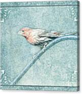 House Finch With Colored Sketch Effect Canvas Print