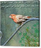 House Finch With Verse Canvas Print