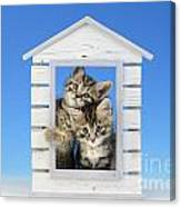 House Of Kittens Ck528 Canvas Print