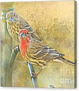 Housefinch Pair With Texture Canvas Print