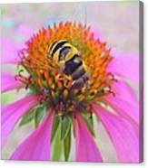 Hover Fly On Purple Coneflower Canvas Print