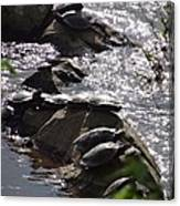 How Many Turtles Canvas Print