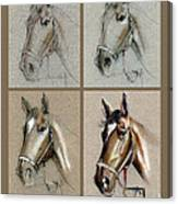 How To Draw A Horse Portrait Canvas Print