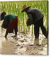 How We May Enjoy Rice Canvas Print