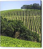 Howell Mountain Vineyards Canvas Print