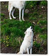 Howling Wolves Canvas Print