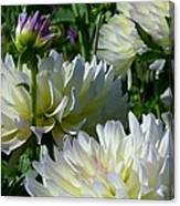 Hues Of Softness Dahlia Canvas Print