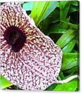 Huge Orchid Canvas Print