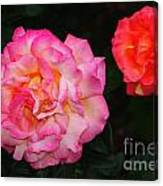 Huge Pink And White Rose...   # Canvas Print