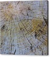 Huge Stump Canvas Print