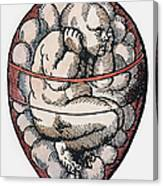 Human Fetus, 16th Century Canvas Print