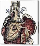 Human Heart, 1543 Canvas Print