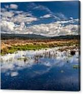 Humboldt Marshes In Spring Canvas Print