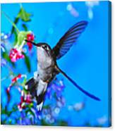 Hummer And Flowers On Acrylic Canvas Print