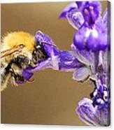 Humming bee  Canvas Print