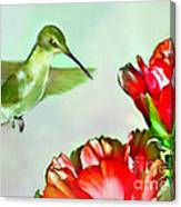 Humming Bird And Cactus Flowers Canvas Print