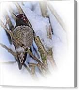Humming Bird And Snow 5 Canvas Print