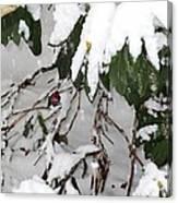 Humming Bird And Snow Canvas Print