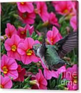 Hummingbird 3219 Canvas Print