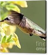 Hummingbird 3725 Canvas Print