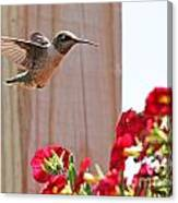 Hummingbird 4533 Canvas Print