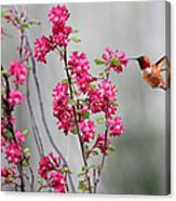 Hummingbird And Flowers Canvas Print