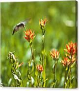 Hummingbird And Paintbrush Flower Canvas Print