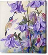Hummingbird And Purple Columbine Canvas Print
